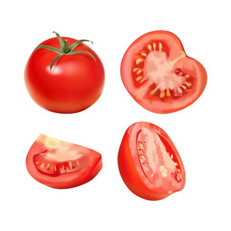 Vector realistic illustration of tomato.