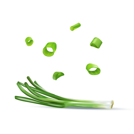 Vector realistic colorful illustration of spring onion.