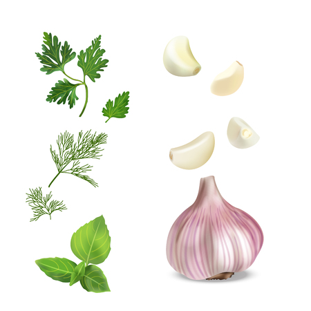 Vector realistic colorful illustration of garlic. Vector illustration of vegetables. Illustration