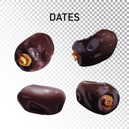Vector realistic illustration of dried dates. Colorful objects on a transparent background.