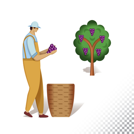 Vector flat icon illustration of farmer and grape bush. The farmer harvesting grape . Colorful objects on a transparent background.  イラスト・ベクター素材