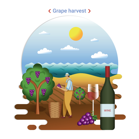 Flat farm landscape illustration of grape harvest. Rural landscape with grape valley, seaside. The farmer harvesting grapes for wine production.  イラスト・ベクター素材