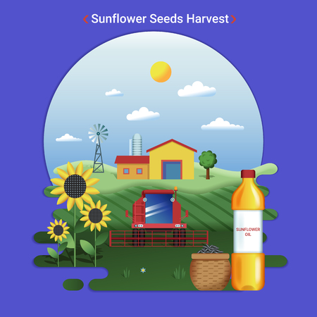 Flat farm landscape illustration of sunflower seeds harvest. Rural landscape with sunflower field and harvester.
