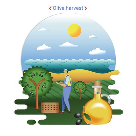 Ilustración de paisaje de granja plana de la cosecha de aceitunas. Paisaje rural con colinas de olivos y mar. El agricultor cosechando aceitunas para la producción de aceite de oliva. Ilustración de vector