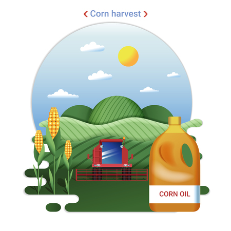 Flat farm landscape illustration of corn harvest. Rural landscape with corn fields and harvester.
