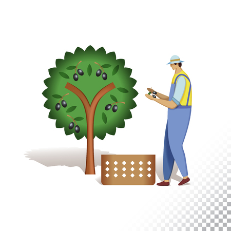 Vector flat icon illustration of farmer and olive tree. The farmer harvesting olives. Colorful objects on a transparent background.