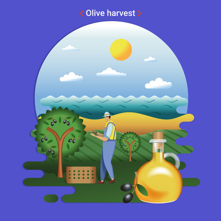Flat farm landscape illustration of Olive harvest. Rural landscape with olive hills and seaside. The farmer harvesting olives for production olive oil. Фото со стока - 127257888
