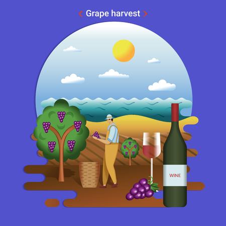 Flat farm landscape illustration of grape harvest. Rural landscape with grape valley, seaside. The farmer harvesting grapes for wine production. Illustration