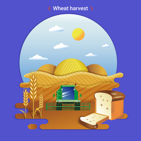 Flat farm landscape illustration of wheat harvest. Rural landscape with wheat valley, field and harvester. Illustration