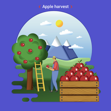 Flat farm landscape illustration of apple harvest. Rural landscape with garden and mountains. The farmer harvesting apples.
