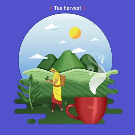 Illustrazione piana del paesaggio dell'azienda agricola della raccolta del tè. Paesaggio rurale con colline di tè e campo di tè. La donna che raccoglie le foglie di tè.