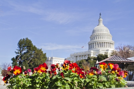 US Capitol Building with flowers, Washington DC