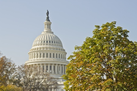 US Capitol Building with tree and blue sky, Washington DC, USA