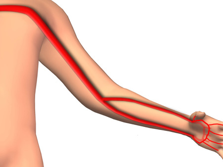Artery Anatomy Upper Extremity Stock Photo Picture And Royalty Free