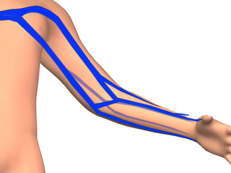Venous Anatomy And Upper Extremity Stock Photo Picture And Royalty