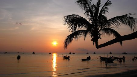 overhanging: Palm overhanging exotic island bech at sunset, in Thailand