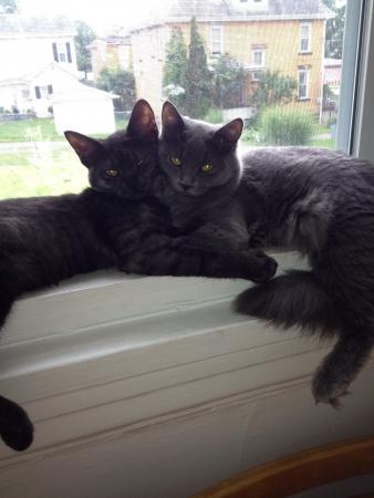 cats Фото со стока
