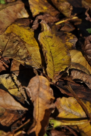 hibernate: leaves of autumn