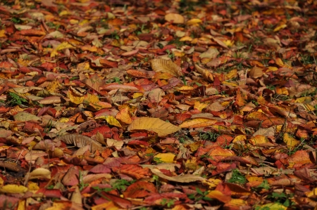 carpet of leaves Stock Photo
