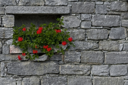 Flower in the Wall Stock Photo