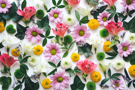 dasiy: Full frame multi colored floral background. Stock Photo
