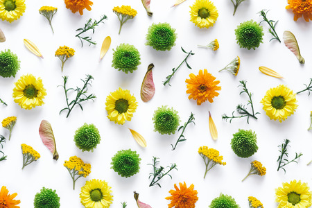 Creative pattern with colorful flowers on white background. Stock Photo