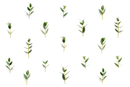 Pattern with green leaves on white background. View from above.
