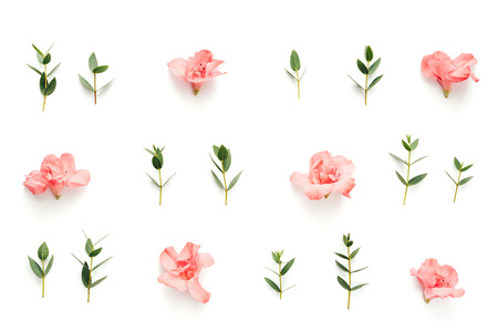 Pattern with soft pink azalea flowers and green leaves on white background. View from above.