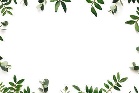 Frame made of green leaves on white background. View from above. Copy space. Flat lay. Design element.
