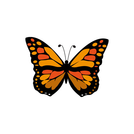 Vector Monarch Butterfly Illustration Isolated On White Background - Vector illustration.eps 10.