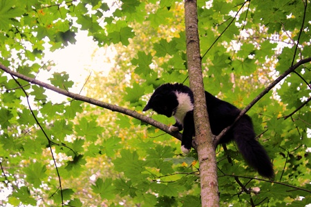 Black and white Funny cat is sitting on a tree like a bird