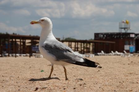 all weather: seagull on a sandy beach nice walks Stock Photo