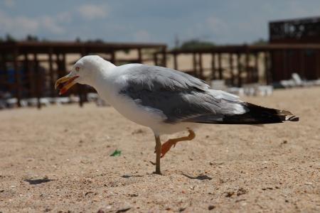 seagull on a sandy beach nice walks Stock Photo