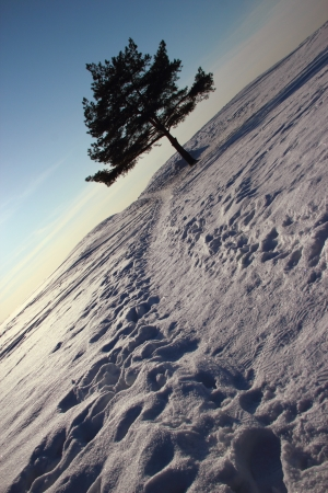 winter landscape with pine and the path to the beach