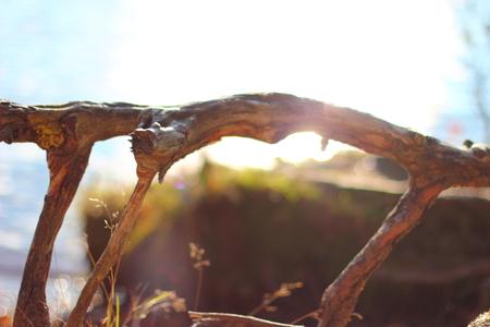 tree roots. Stock Photo