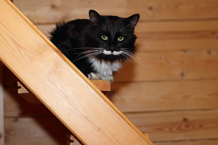 cat at staircase Stock Photo