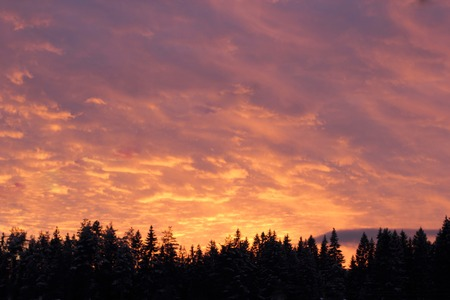 firs: Pink sky over the firs Stock Photo