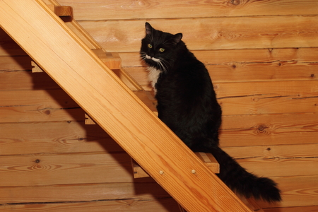 bigodes: Gato preto e branco bonita com longos bigodes. luz solar
