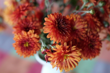 floristry: Beautiful bouquet of chrysanthemums in red colors Stock Photo