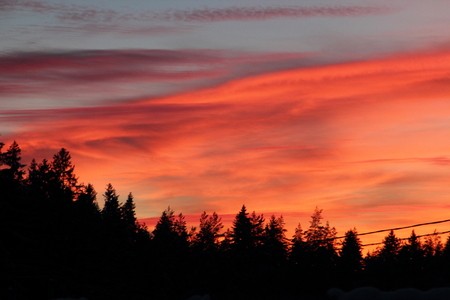 Multicolored bright sunset over the tops of spruce trees
