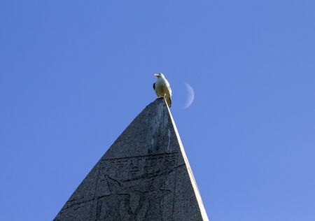 Brought to the Constantinople at 4th century A.D., Obelisk of Theodosius had a long journey from Egypt via Athens. A seagull sits happily at the top with crescent moon behind. Reklamní fotografie