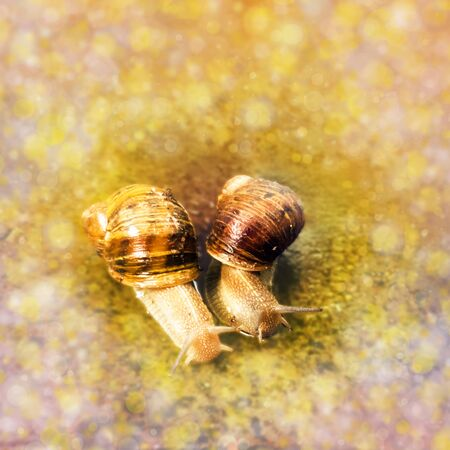 Close up digitally enhanced image of a couple of snails in an affectionate relationship.