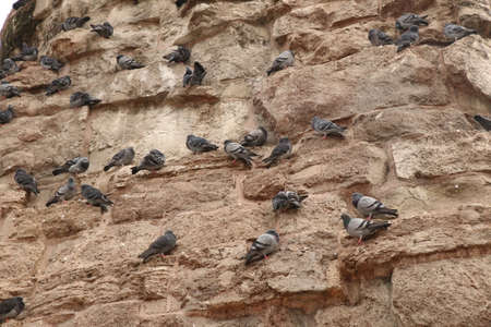 Still image of a flock of pigeons standing on the side of the base of the Column of Constantine at Istanbul, Turkey, in low contrast image.