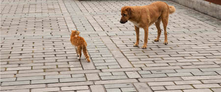A tabby cat and a tabby dog stare at each other threateningly, outdoors on stone pavement. 免版税图像