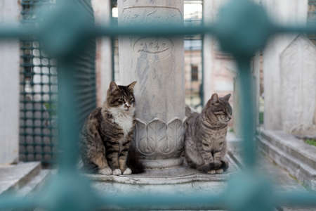 Telephoto shot of two stray cats at a historic Ottoman tomb, sitting by a marble gravestone, framed with turquoise iron bars.