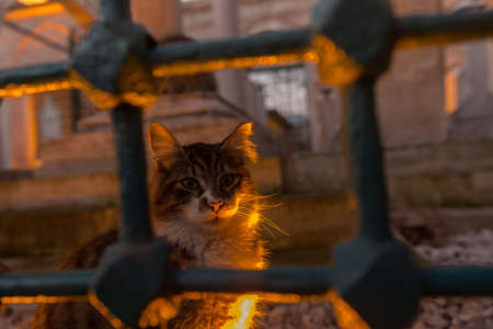Portrait of a cute stray cat illuminated by spotlights, behind the bars of a historic graveyard at dusk.