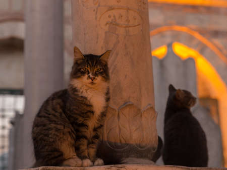 Full body portrait of a brown tabby cat, with another nearby, at a historic Ottoman cemetery at dusk with tungsten lights.
