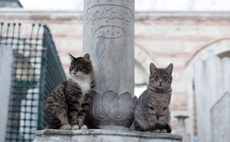 Full body portrait of two stray cats, a brown-white tabby and a gray tabby, sitting by an Ottoman gravestone made of marble, with scripts, in Istanbul, Turkey 免版税图像