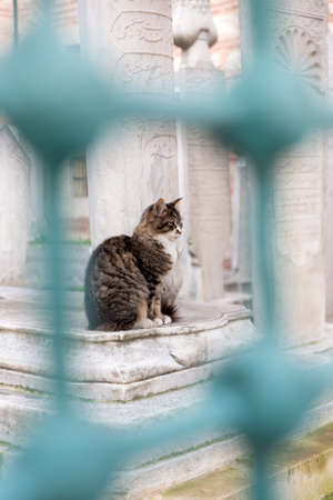 Full body profile of a tabby cat sitting by a gravestone at a historic Ottoman graveyard in Istanbul. Cat is framed with turquoise iron bars.