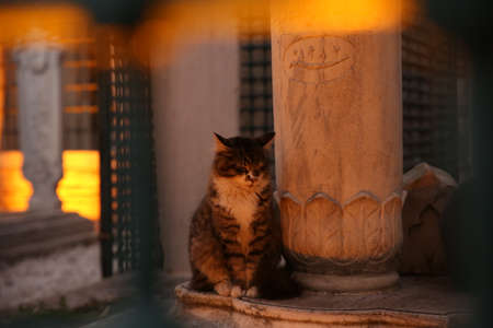 Full body portrait of a tabby cat calmly sitting with closed eyes beside an Ottoman tomb at dusk, with foreground bokeh.